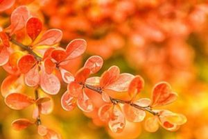 herbst fotos preview