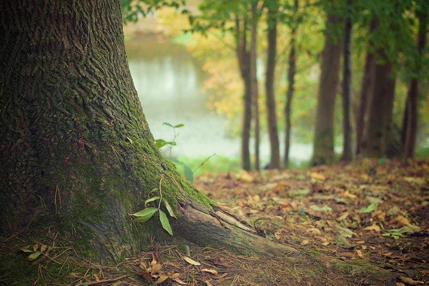 Herbstfoto Wald